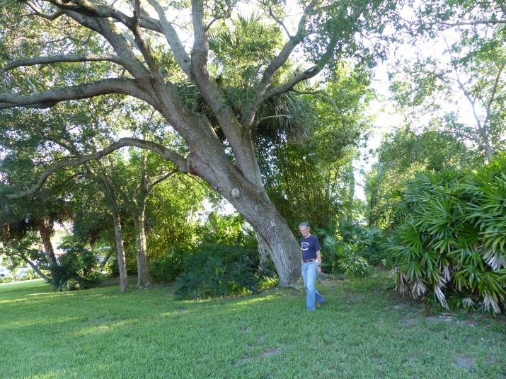 tim glover & live oak