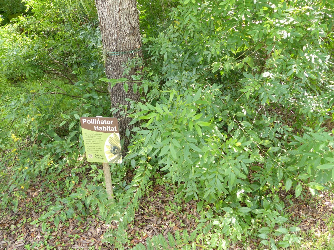 pollinator habitat2