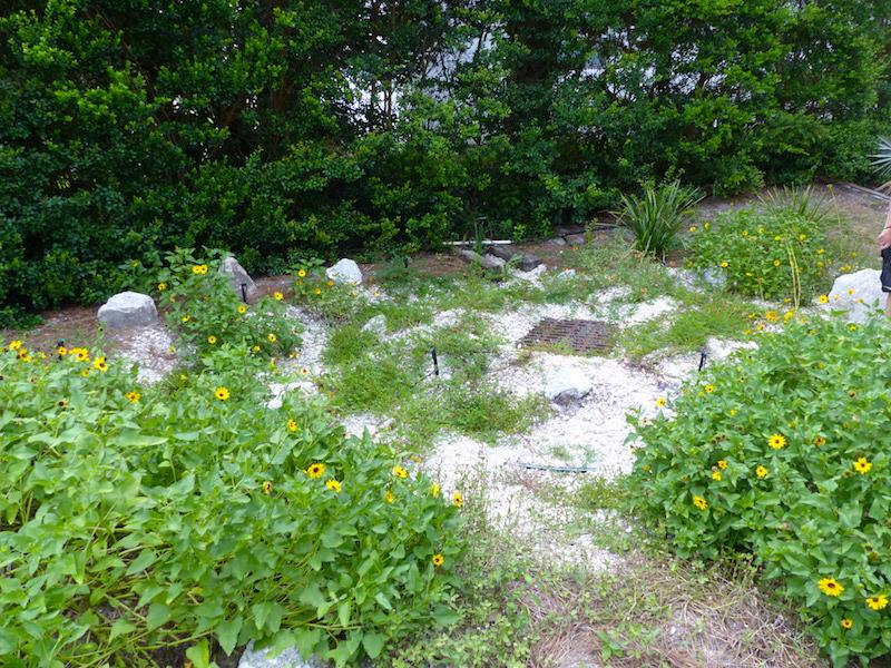!!rain garden copy